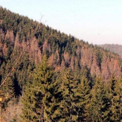 Brković zbog profita nanio štetu pljevaljskim šumama