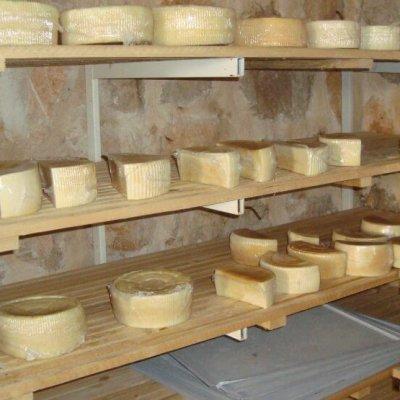 Najveći broj korisnika premija za preradu mlijeka na gazdinstvu iz Pljevalja