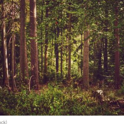 IZNAD SELA TOMAŠEVO Bjelopoljac ubijen tokom lova