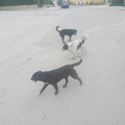 Psi lutalice brzo će u azil