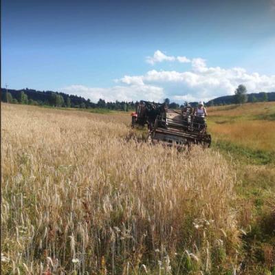 Poljoprivredno gazdinstvo Obrenića u Matarugama, Ljutićima i Rabitlju bavi se proizvodnjom žitarica, malina i pčelarstvom