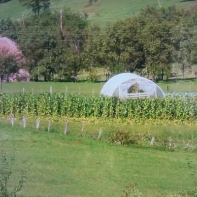 Poljoprivredno gazdinstvo Kušljević iz sela Lađane kod Pljevalja
