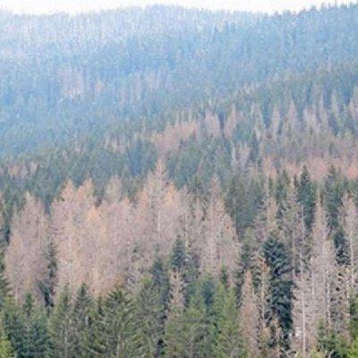 Ugrožene šume na području Ljubišnje