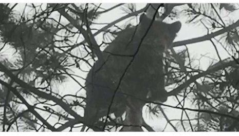 Berane: Mladunci medvjeda u blizini centra grada