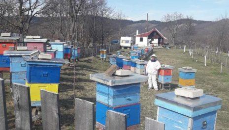 Meda u košnicama nema ni za pčele ni za goste