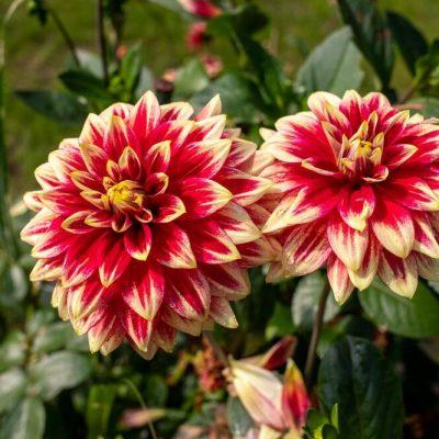 OVO CVIJEĆE JE NAJBOLJE POSADITI U MAJU: Cvjetaće raskošno sve do prvih mrazeva!