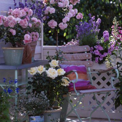 EVO KAKO DA GAJITE RUŽE NA BALKONU: Pomoću ovog trika, one će bujati iako su u saksijama!
