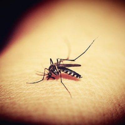 Kako da se riješite komaraca