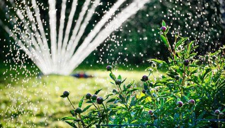 ZALIVANJE BILJAKA I BAŠTE TOKOM LJETA: Pravilo broj 1 da biljke dobro cvjetaju i rađaju!
