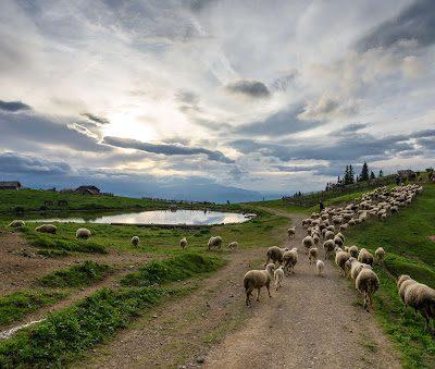 Teška godina za stočare, nedovoljno trave i vode
