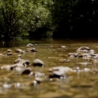 Eco team – Zaštita gornjeg toka rijeke Ćehotine