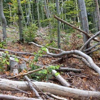 Uprava za šume se oglasila povodom sječe šume na Gosteču