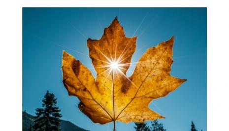 KRAJ oktobra: U četvrtak SUNČANO, ovo su MAKSIMALNE temperature