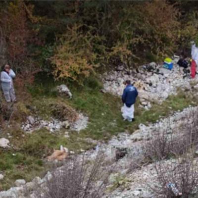 Uz nadzor inspekcijskih službi u toku akcija uklanjanja uginulih životinja na Jagnjilu