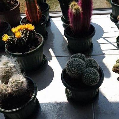 Kaktusi stradali zbog finasijskog izvještaja
